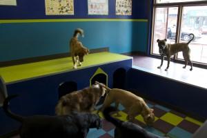 dogschool3