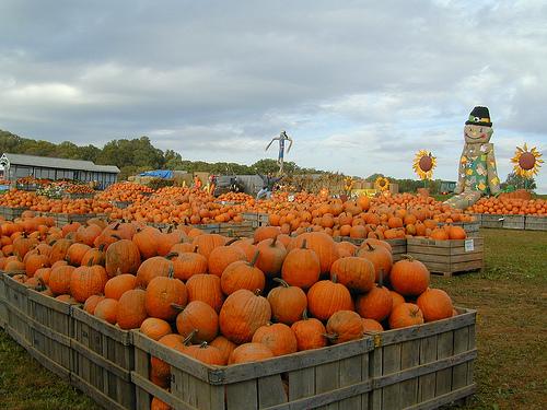 linvilla-pumpkins