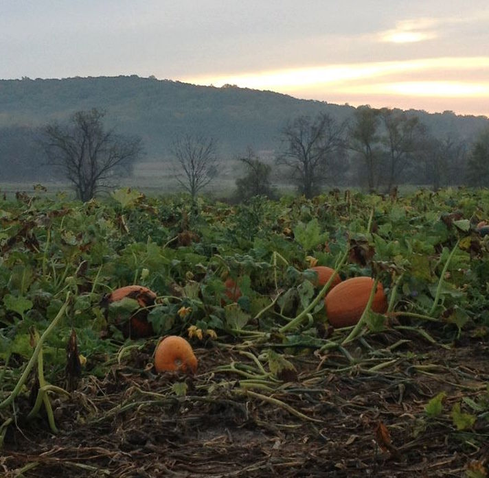 none-such-farm-pumpkin-patch