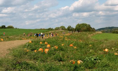 milkyway-farm-pumpkin-patch