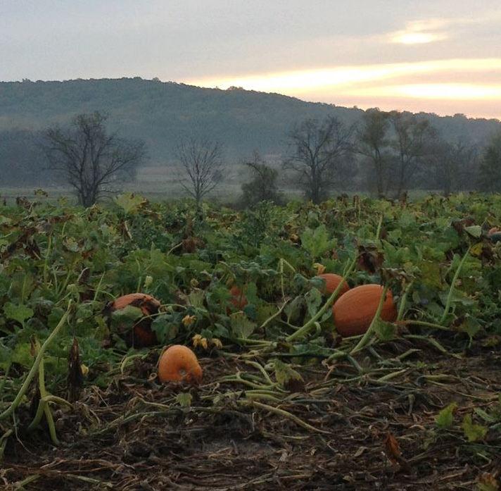 none-such-farm-pumpkin-patch