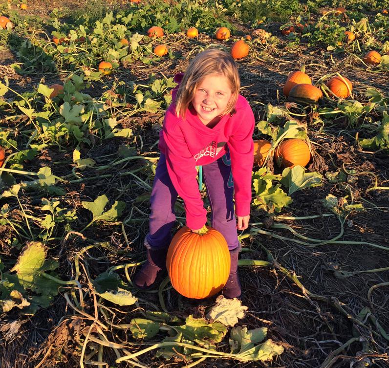 shadybrook-pumpkin