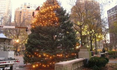 rittenhouse-square-tree