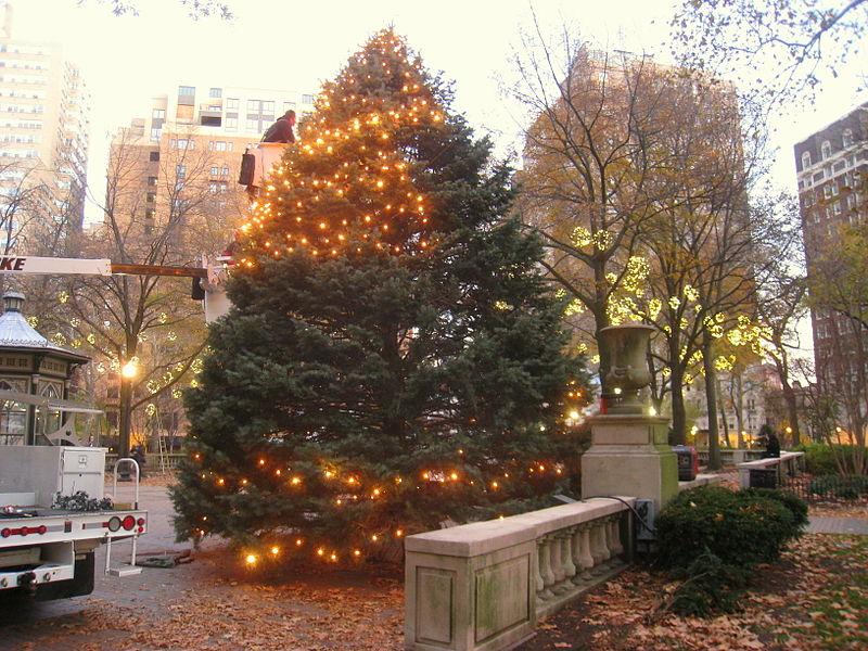 rittenhouse-square-tree