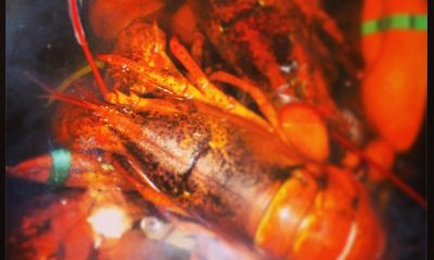 lobster-month