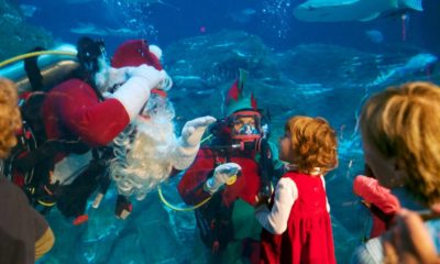 christmas-underwater-adventure aquarium