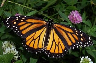Breakfast with Butterflies
