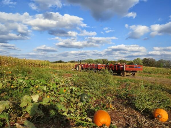 freddy hill farms
